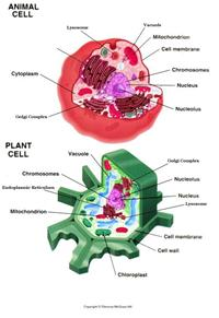 animal cell anatomy label online worksheet.